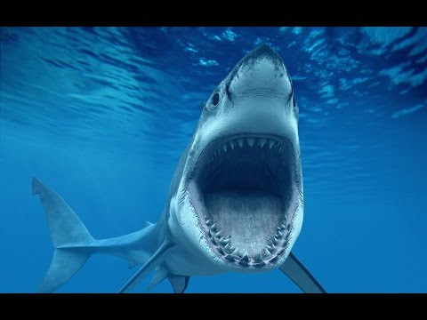 Are You Hunting Sharks Or Are They Hunting You? True Prosperity Tip